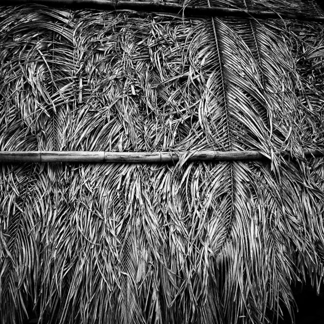 """Palm Thatch"" stock image"