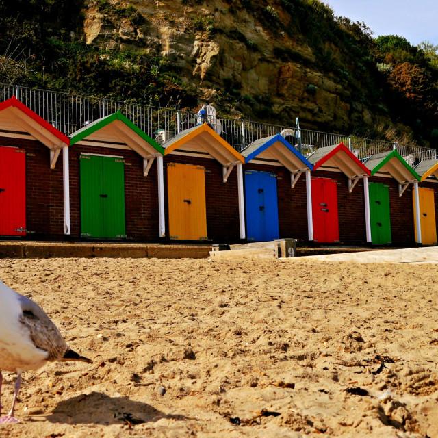 """Beach hut beauty."" stock image"