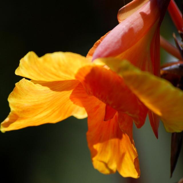 """""""Golden Petals"""" stock image"""