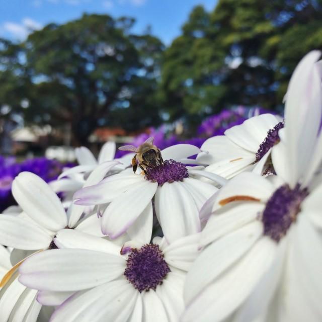 """HDR Macro - Honey Bee On Flower"" stock image"