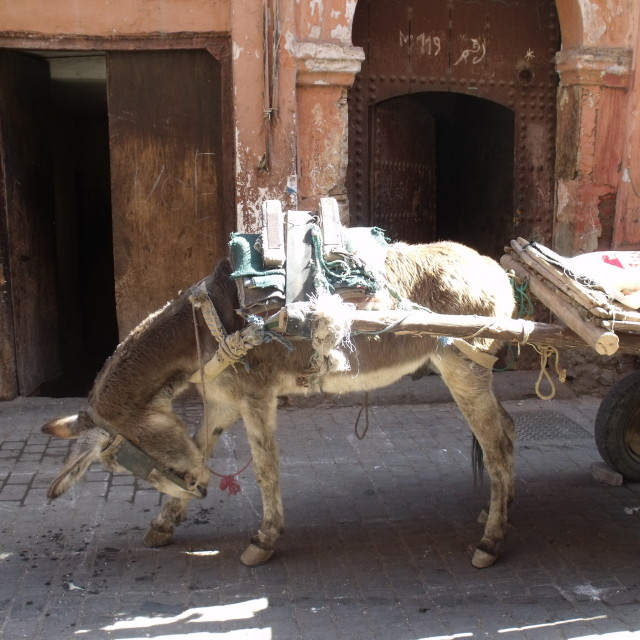 """Donkey with cart in Marrakesh"" stock image"