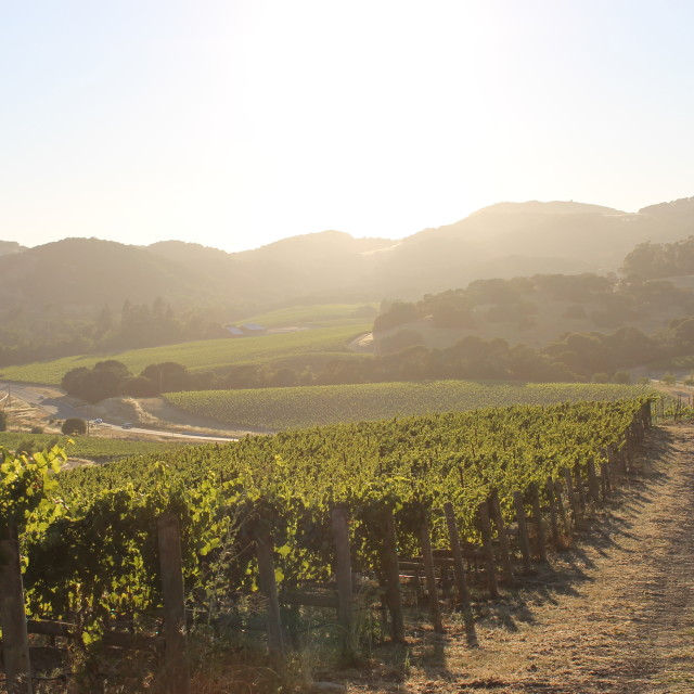 """Napa Valley, California"" stock image"