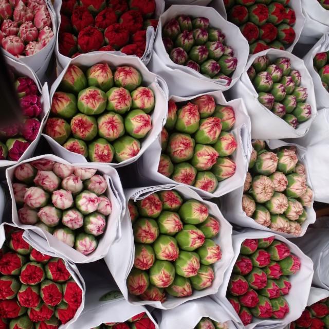 """Carnations - Hong Kong flower market"" stock image"