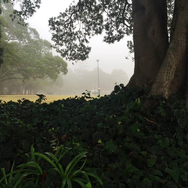 """Morning Fog Park View"" stock image"