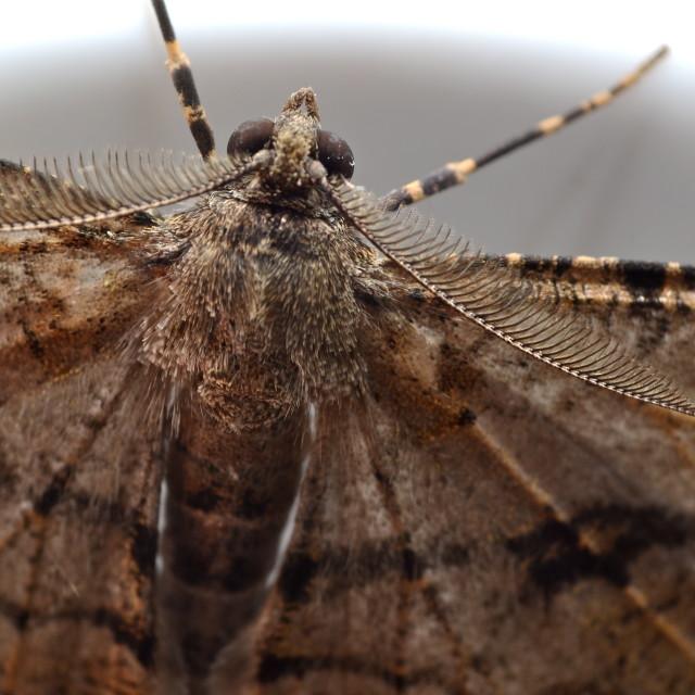 """Moth antennae"" stock image"