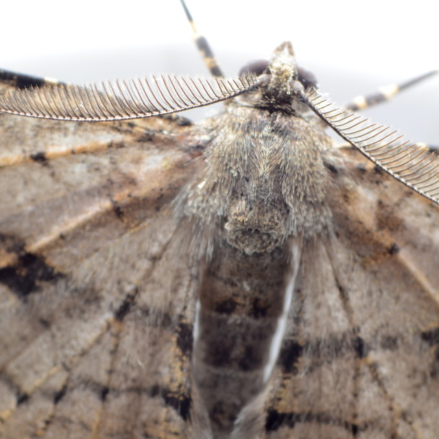 """Moth close up"" stock image"