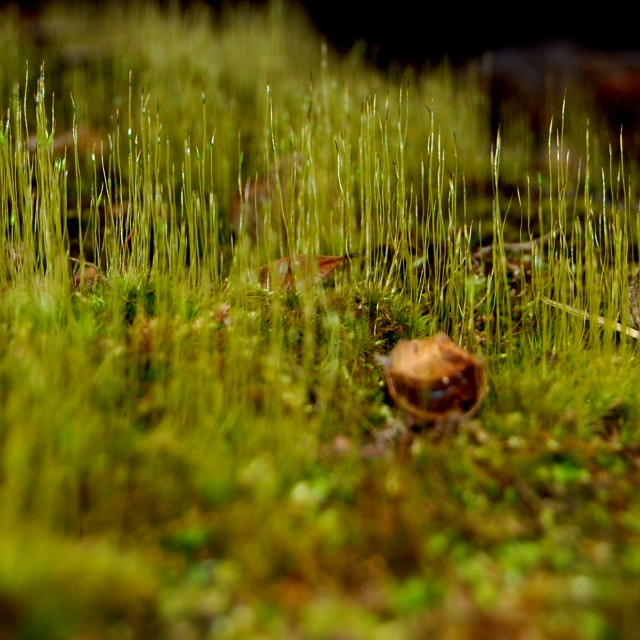 """Miniature Grasslands"" stock image"