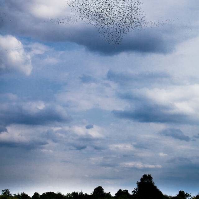 """Starlings' heart"" stock image"