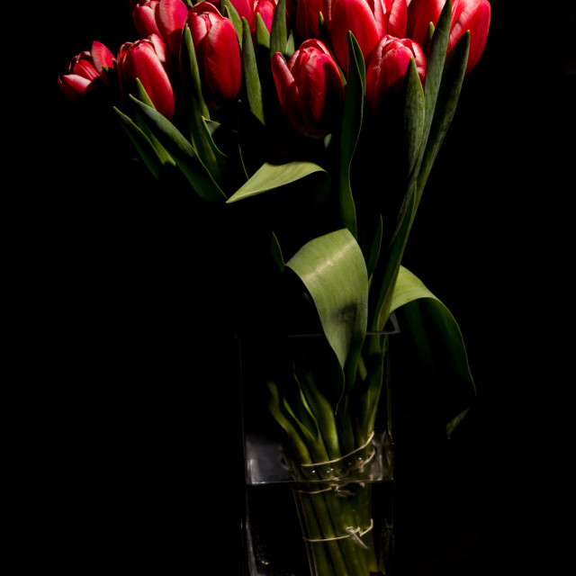 """""""Red tulips in the vase"""" stock image"""