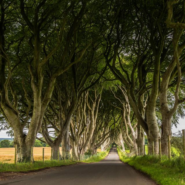 """Dark Hedges, Northern Ireland"" stock image"
