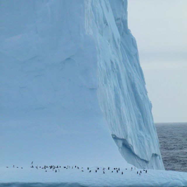 """Iceberg with penguins"" stock image"