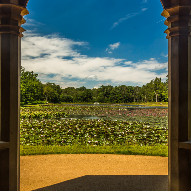 """""""Framed lake of water lilies"""" stock image"""