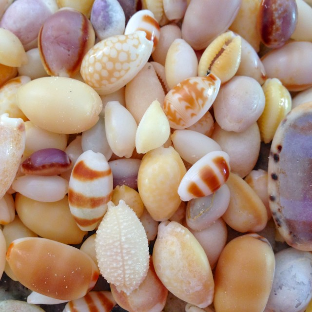 """Shells"" stock image"