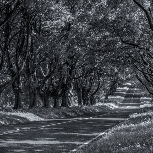 """Tree lined road"" stock image"