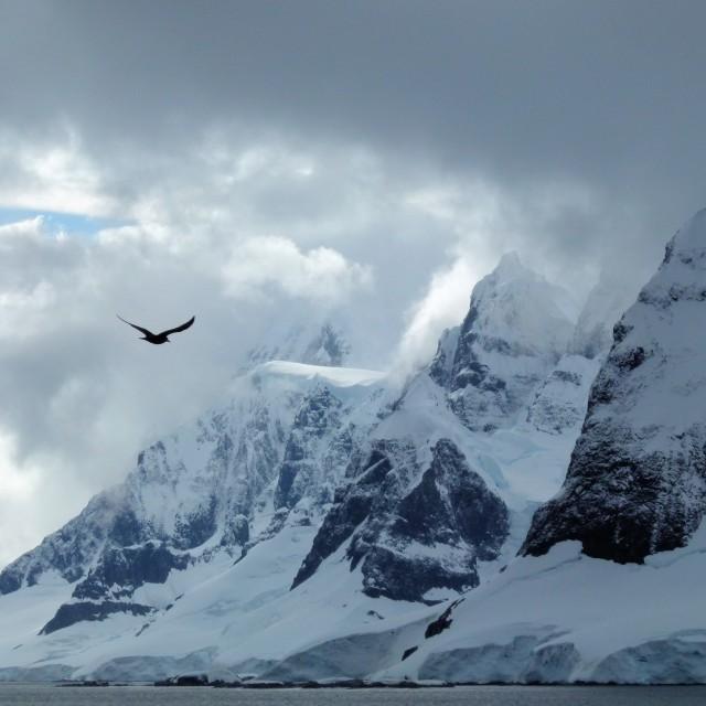 """Antarctic peaks and bird"" stock image"