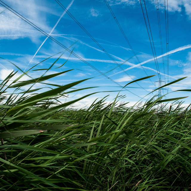 """Rainham Marshes"" stock image"