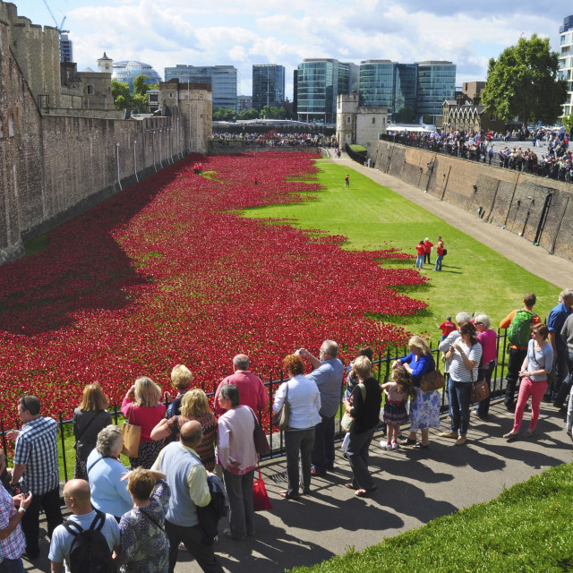 """Remembrance Poppies, London"" stock image"