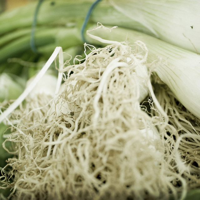 """""""Spring Onions"""" stock image"""