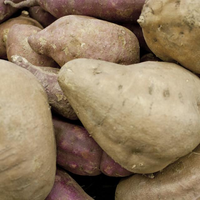 """""""Sweet Potatoes"""" stock image"""