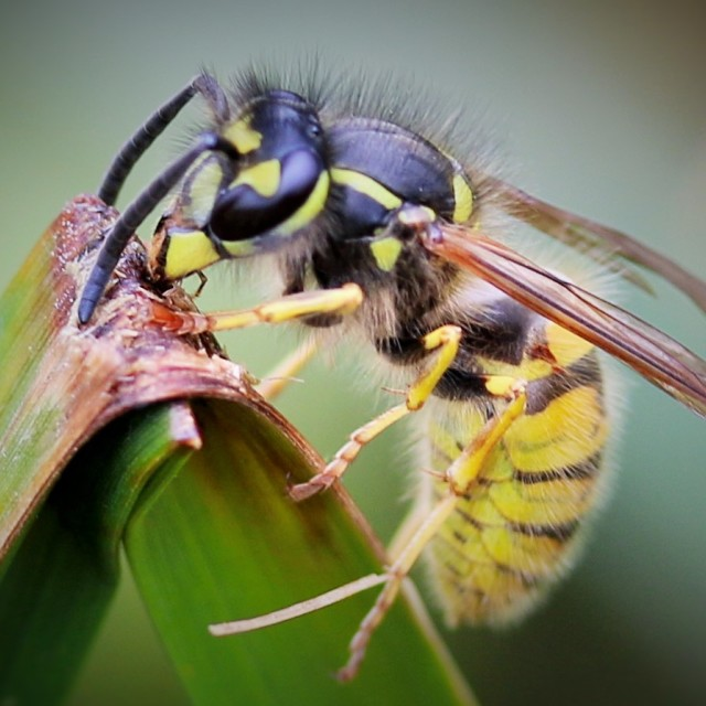 """wasp"" stock image"