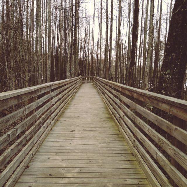 """Wooden Swamp Bridge"" stock image"