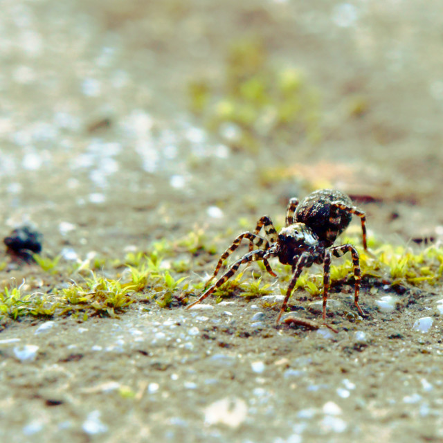 """2mm Tiny Spider"" stock image"
