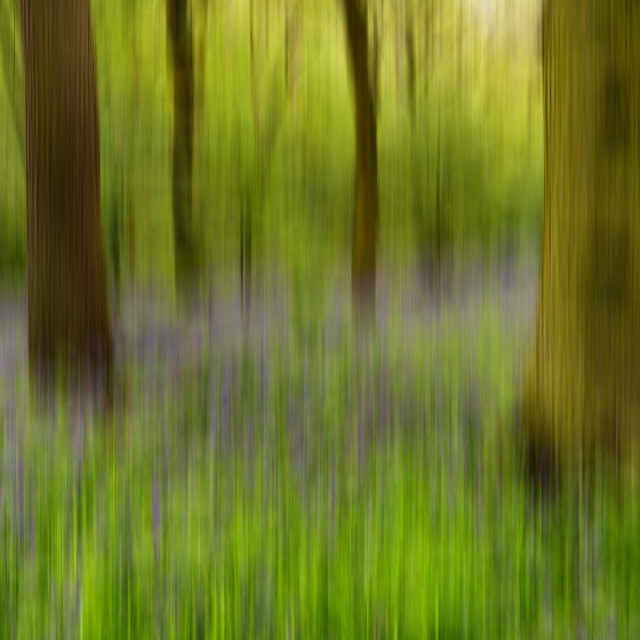 """Bluebell Wood Abstract"" stock image"
