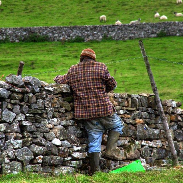 """Dry Stone Walling"" stock image"
