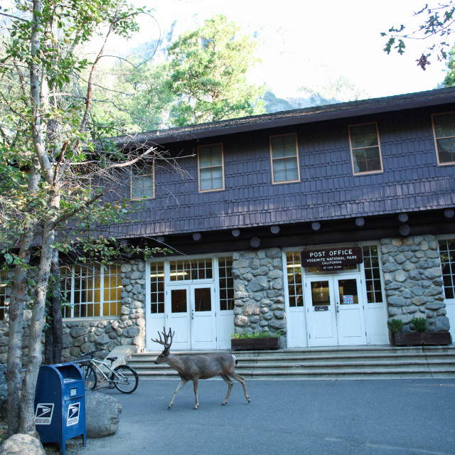 """Mule deer at the post office in Yosemite National Park."" stock image"