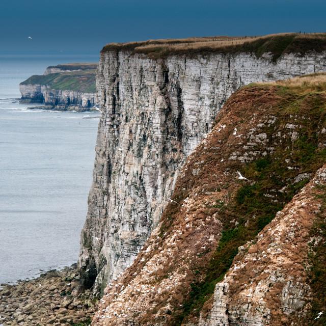 """Bempton Cliffs"" stock image"