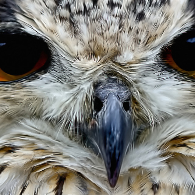 """Bengali Eagle Owl - Painted"" stock image"