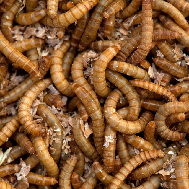 """Can of worms"" stock image"