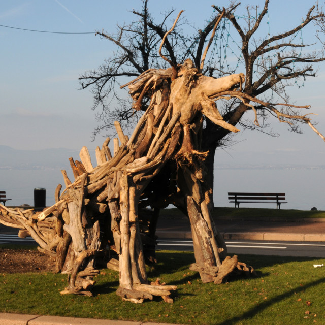 """Driftwood sculpture"" stock image"