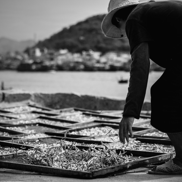 """Drying fish"" stock image"