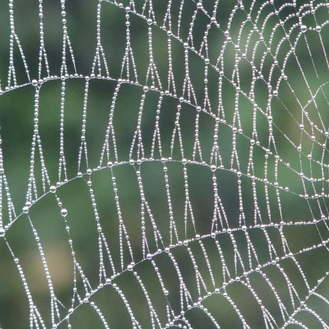 """Morning dew on a spiders web"" stock image"