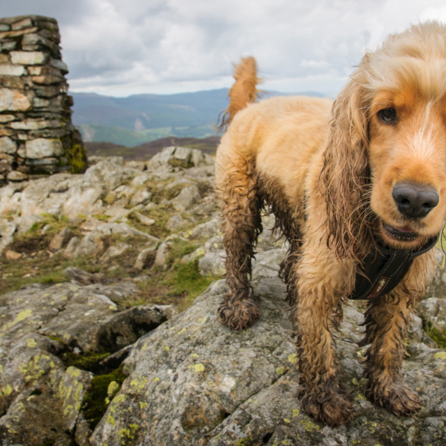 """Muddy Dog"" stock image"