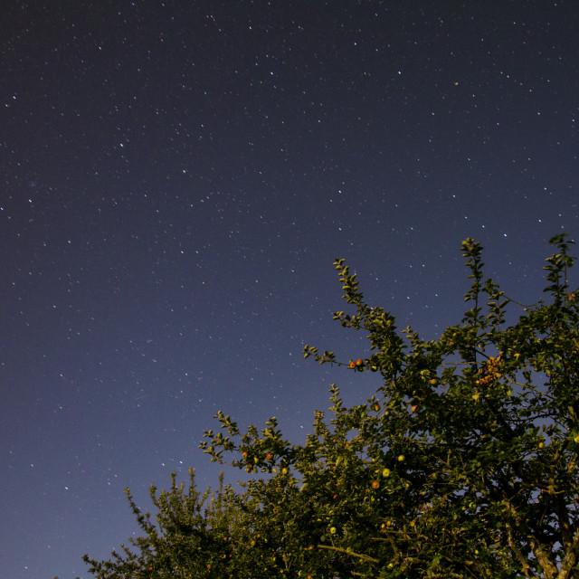 """Apple tree at night"" stock image"