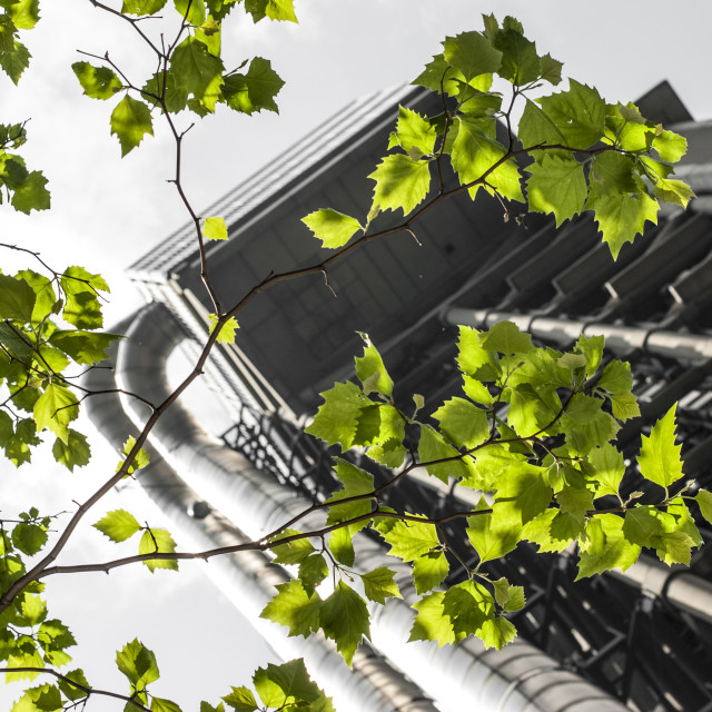 """Lloyd's and greenery"" stock image"