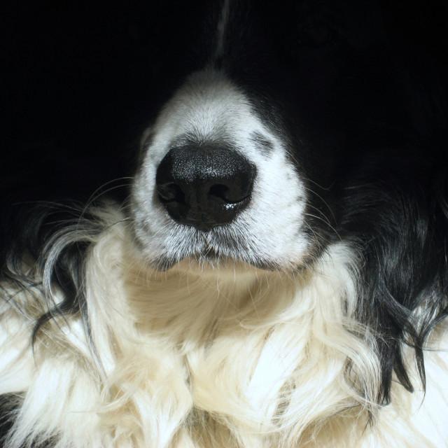 """""""Dog close up"""" stock image"""