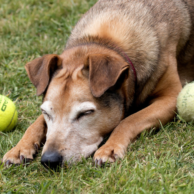 """""""Old Dog"""" stock image"""