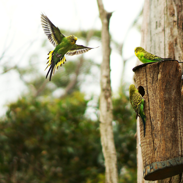"""""""Returning home parrots"""" stock image"""