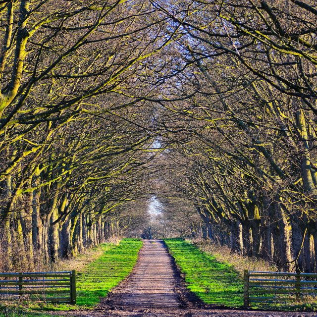 """Tree lined lane"" stock image"
