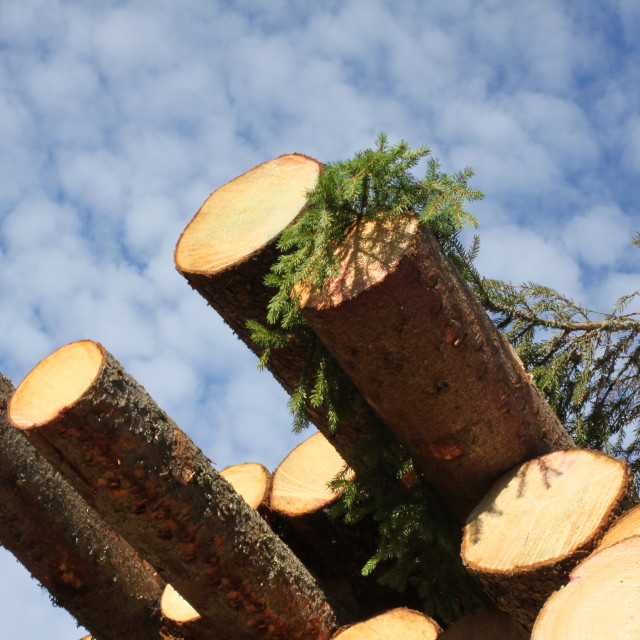 """Wood"" stock image"