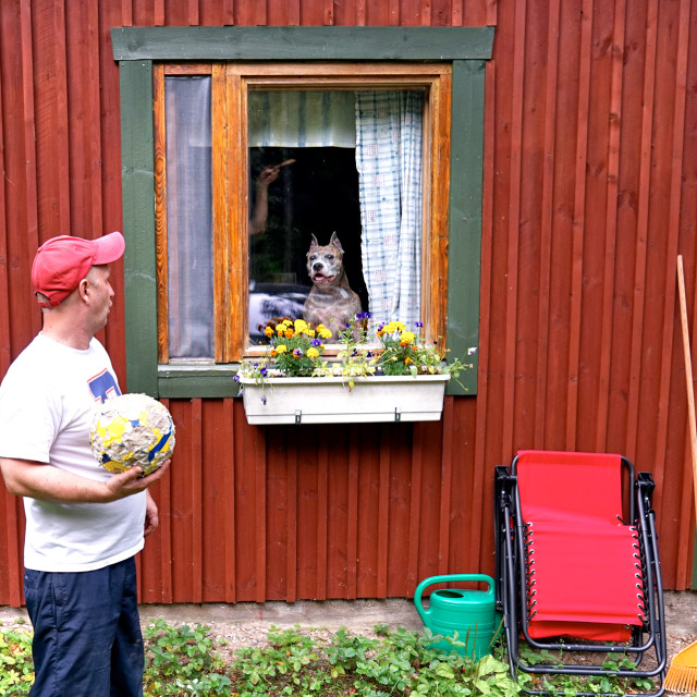"""""""Dog in a window"""" stock image"""