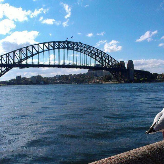 """Seagull Enjoys Sydney Harbour"" stock image"