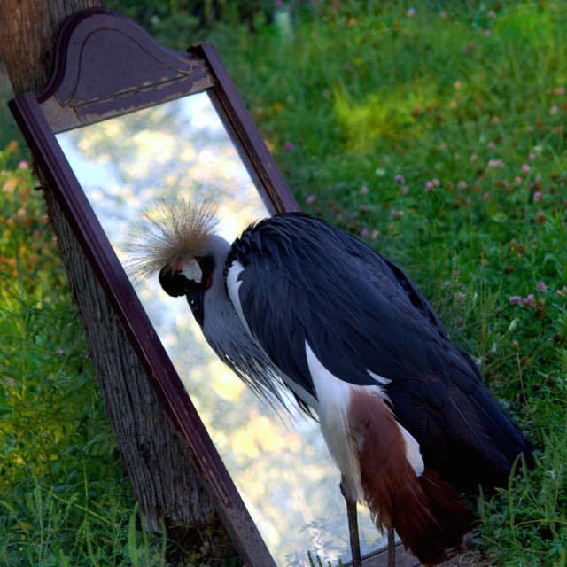 """""""Birds love to be mirrored!"""" stock image"""