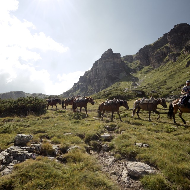 """Horses carrying supplies at the Rila Lakes"" stock image"