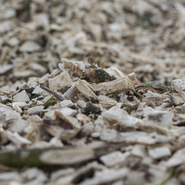 """Wood chips"" stock image"