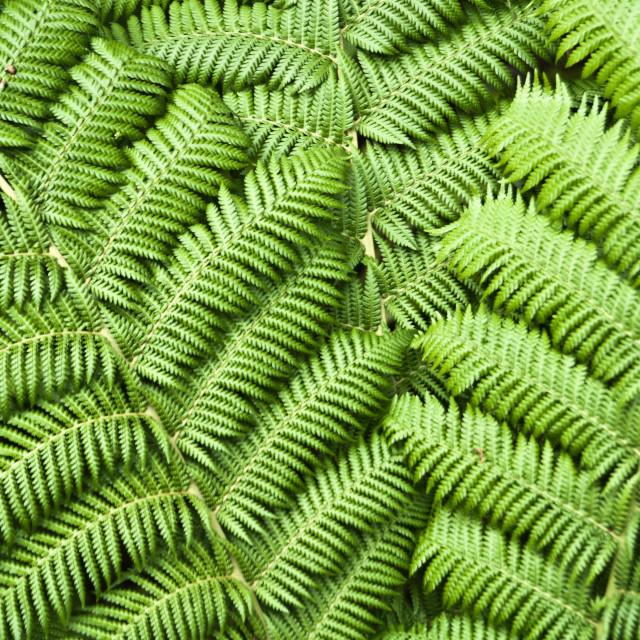 """Green fern"" stock image"