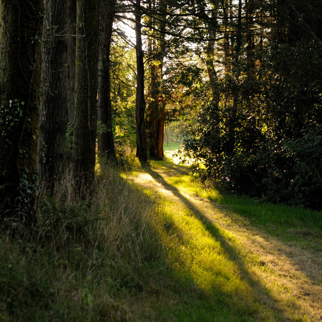 """Sun set woodland walk"" stock image"
